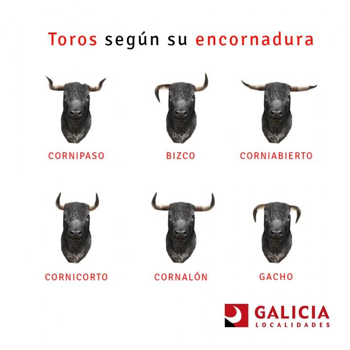Tipos de toros de lidia según los cuernos